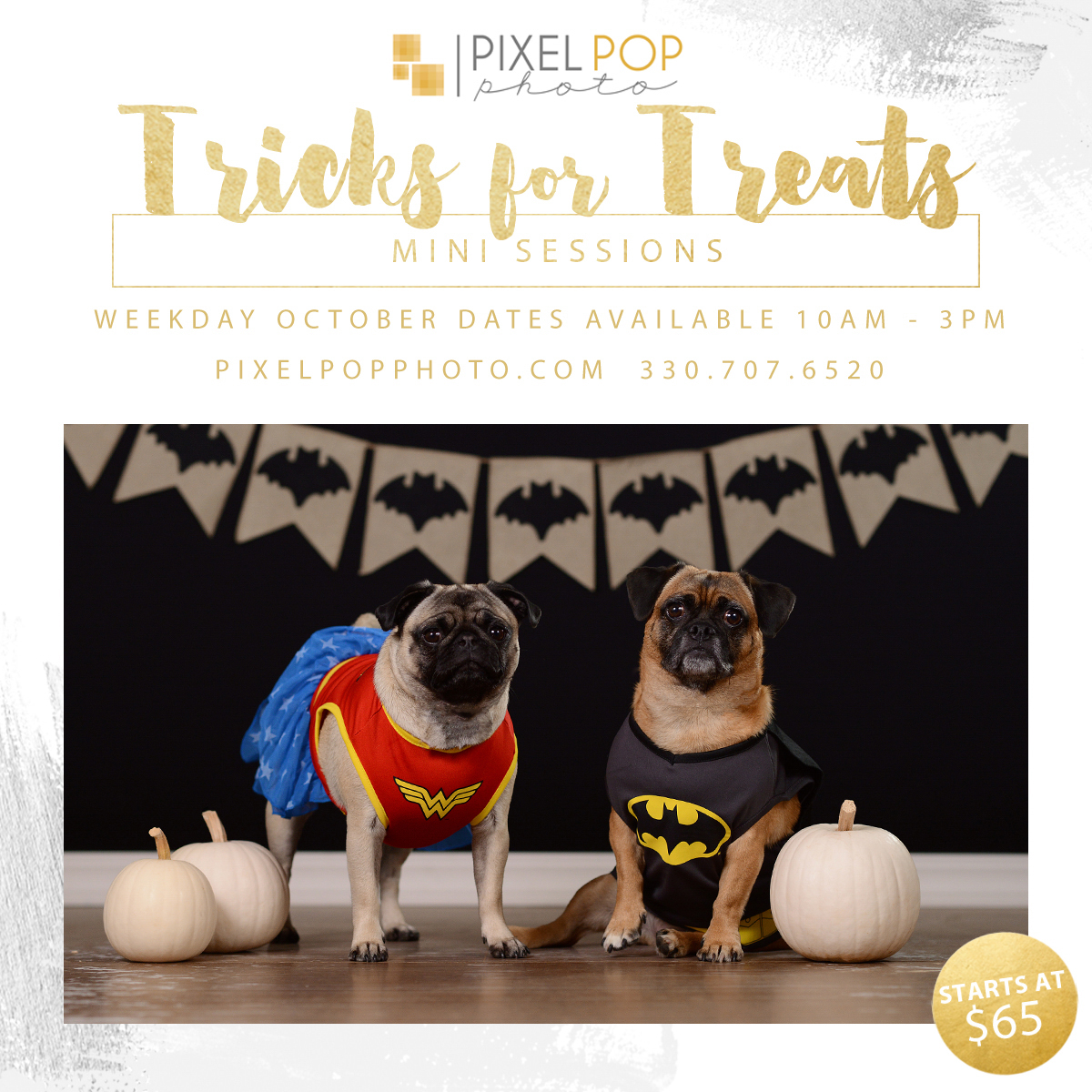 Pixel-Pop-Photography-Pixel-Pop-Photo-Youngstown-dog-photographer-Boardman-dog-photographer-Youngstown-Halloween-mini-sessions